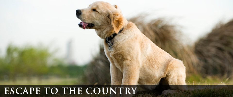 escape to the country | dog