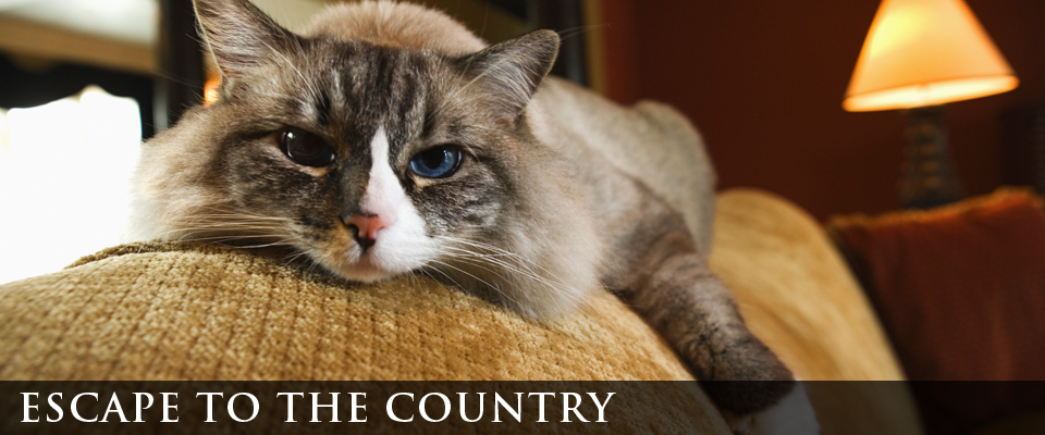escape to the country | cat