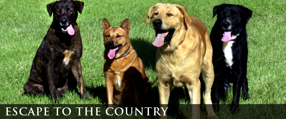 escape to the country | dogs