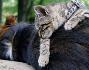 cat resting on top of dog